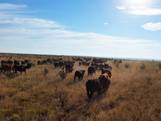 cattlepasture