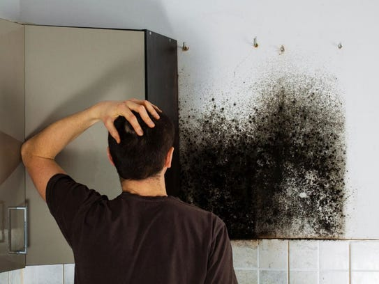 Mold can lurk behind walls and household fixtures even