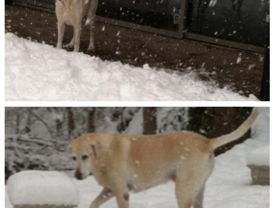 Brandy cautiously enters the snow outside her home Sunday.
