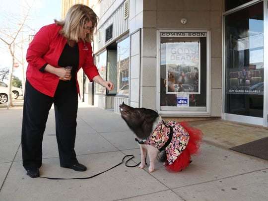 Dawn Bleeker gives her mini pig, Joy, a treat outside the Capitol II Theatre in Newton.