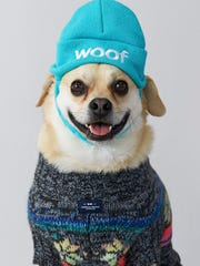 Photo provided by American Eagle Outfitters shows a dog wearing an American Beagle Outfitters beanie and sweater. For some pet owners, clothing plays into a luxury lifestyle. For others, it's a way to match man's best friend; and sometimes it's simply about keeping animals warm this winter.