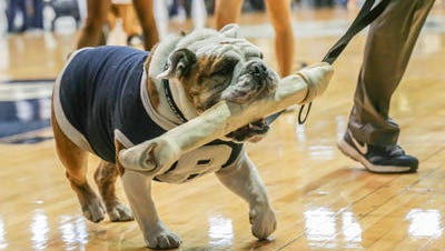 Butler mascot Blue III, or Trip (for Triple), is ready to return after rehabbing an injury.