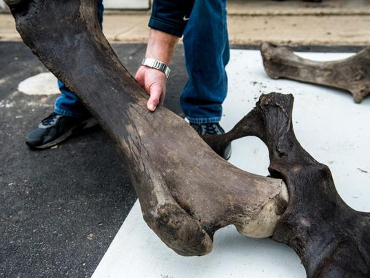 Mastodon Bones-Michigan