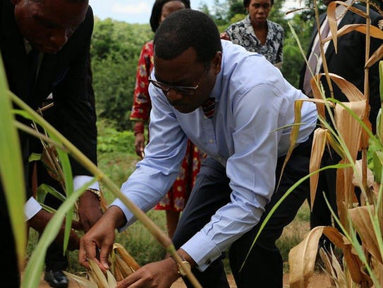 Minister of Agriculture Akinwumi Adesina visits a wheat