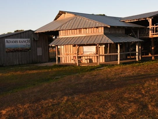 The open barn at Adams Ranch, where cowboys and cowgirls