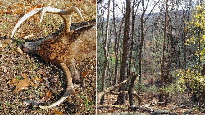 The dawn of a new deer season is upon us, as hopeful hunters take to the whitetail woods in pursuit of Pennsylvania's most popular game species.