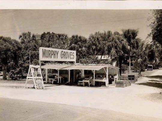 Murphy Groves in Alva in 1954.