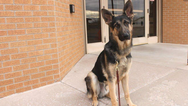 K9 Clint, named after fallen Alamogordo police officer Clint Corvinus, is the first dog of APD's new K9 unit. K9 Clint is 10 months old and in training for patrol in Alamogordo.