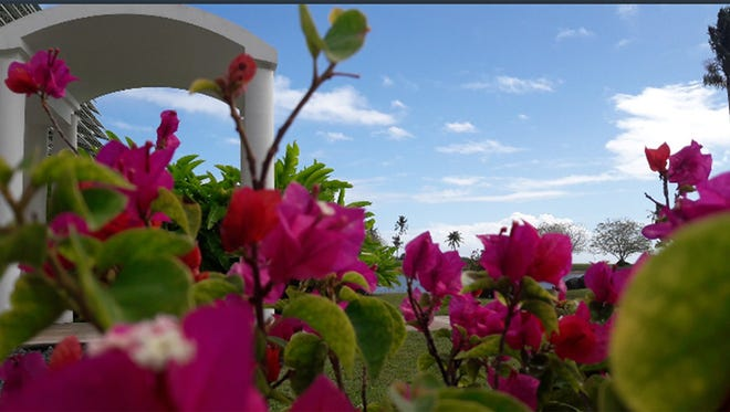 Photo of the Week winner Destiny Charfauros captured this photo of flowers at Leo Palace Resort on April 15, 2018.