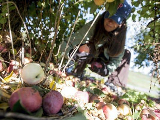 gleaning.jpg