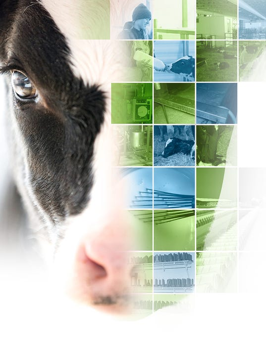 Calf-Solutions-Perspective-graphic.jpg