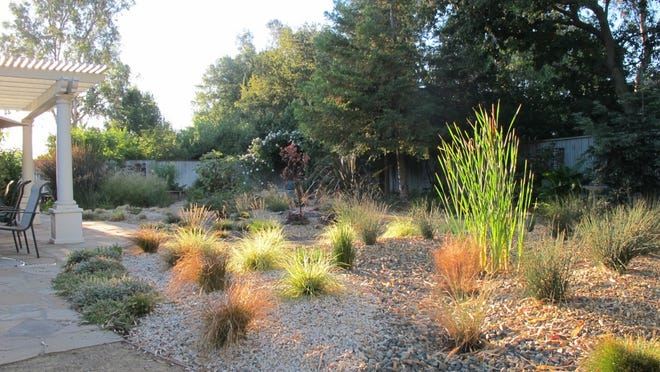 This 2014 photo provided by Ann Savageau shows her sustainable drought-tolerant garden, that includes cattail, sedge, and rush in the foreground; and fescue, salvia, penstemon in the background, in Davis, Calif. As many parts of the country struggle with drought, heavy downpours and rising water bills, the move toward sustainable gardening is picking up steam, experts say. (AP Photo/Ann Savageau)