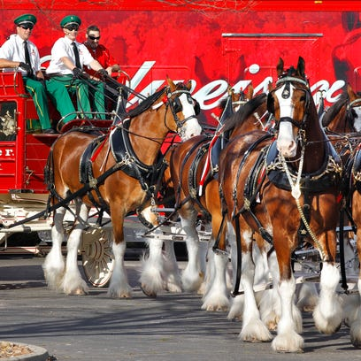 The Budweiser Clydesdales will make an exclusive hitch