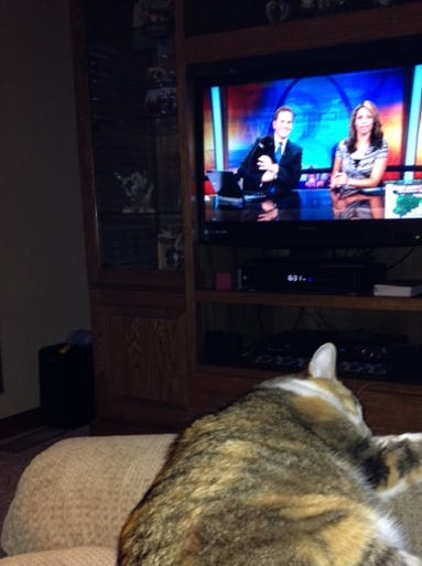 July 2 - Gracie loves to watch Today in St. Louis with