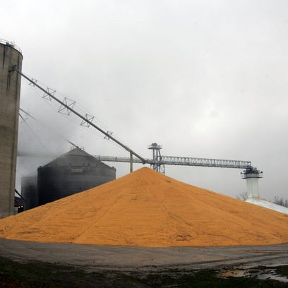 A large pile of harvested corn stands outside the grain