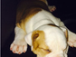 Justin Bieber's pooch Karma napped her way through this Instagram snap.
