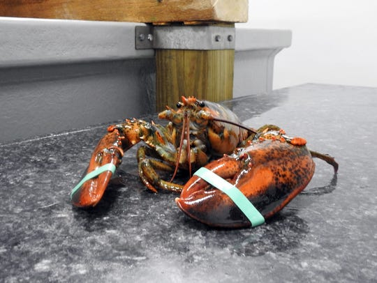 Lobster Lovers Express offers fresh Maine lobster and
