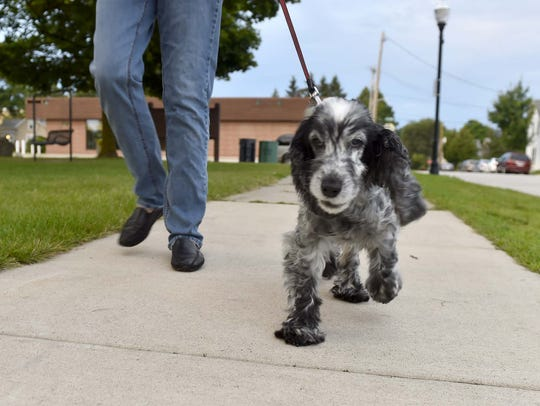 Lilly and her owner walk the sidewalk surrounding Martin