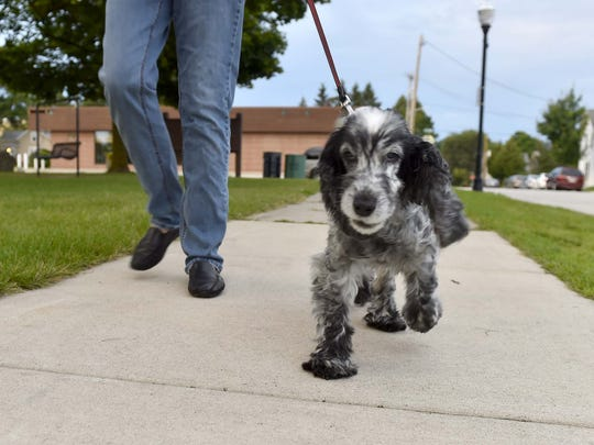 Lilly and her owner walk the sidewalk surrounding Martin Park in Sturgeon Bay.