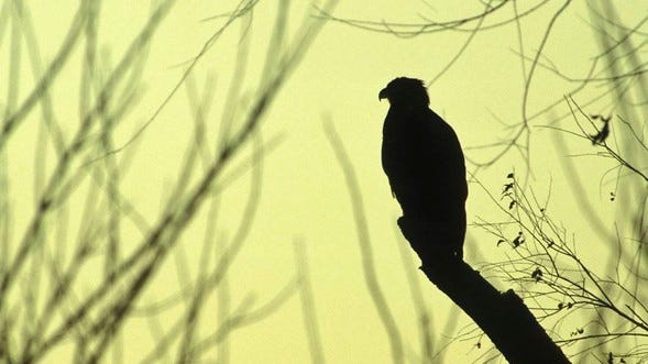 Runge Nature Center will remain closed through January, but will continue to offer outdoor and virtual programs, including opportunities to see bald eagles along the Missouri River. Register to attend a program and ring in the new year with Runge.
