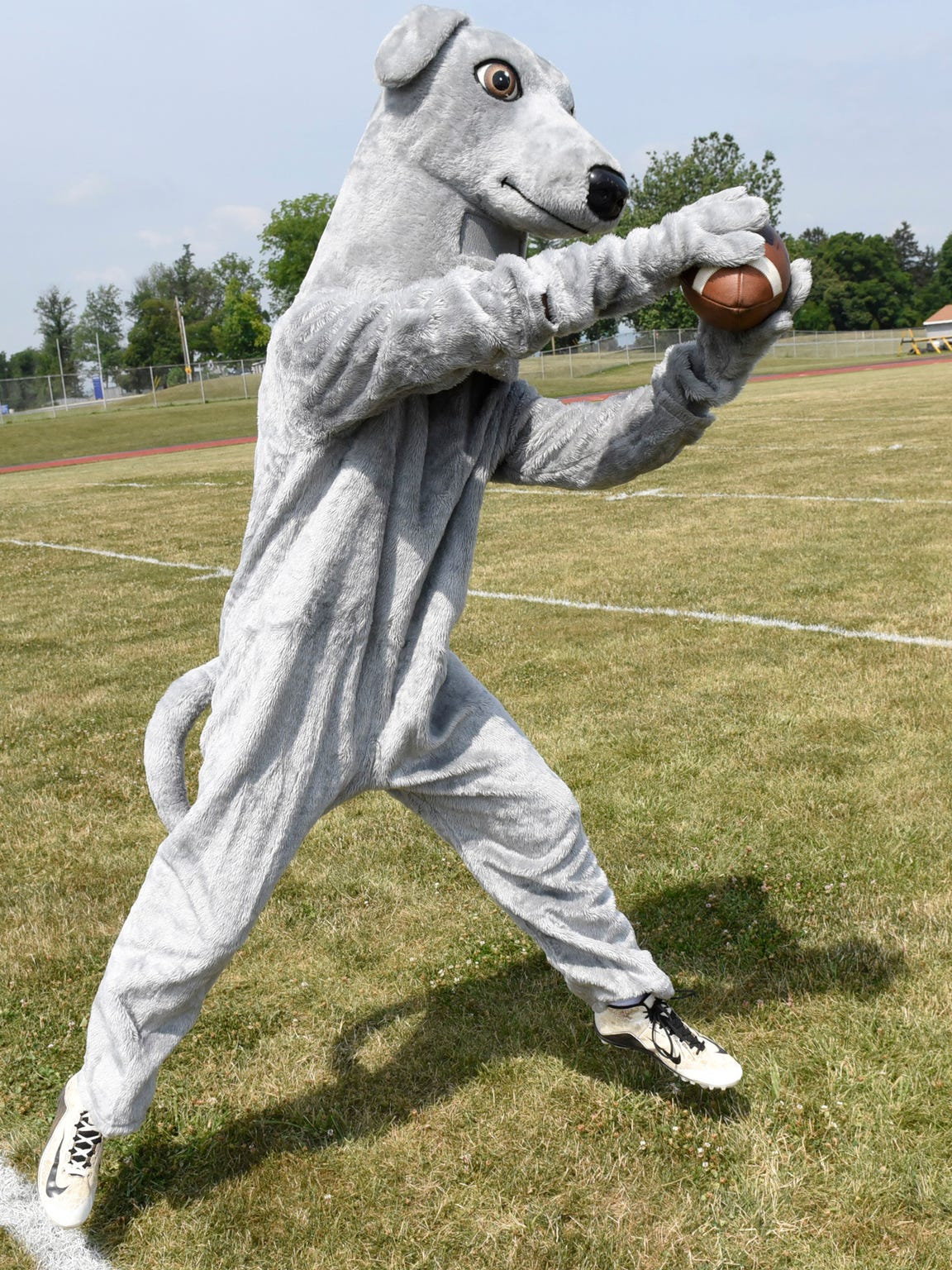 Tyler Gustafson, a recent graduate, wore the Shippensburg Greyhound mascot costume at some events for the school.