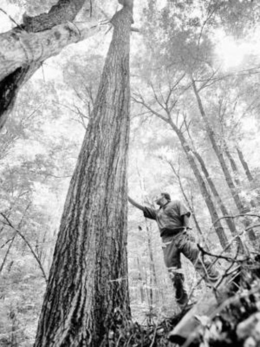 LoggingPictureFromIndiana.jpg