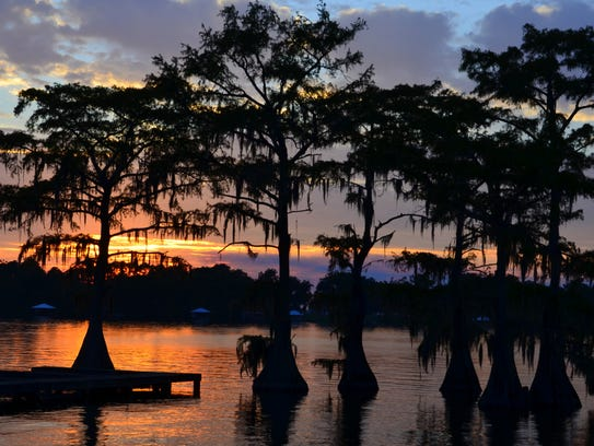 Cypress Trees in Silhouette: Cypress trees silhouetted