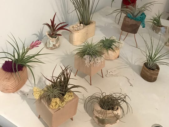 Air plants from Indy Urban Lumber, $10-$50