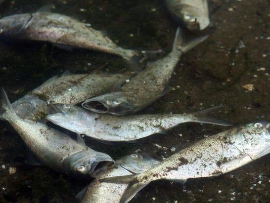 fish0512b (2).jpg