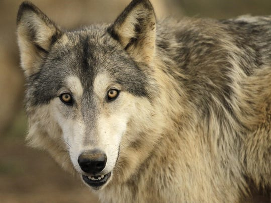 Wolf Run provides refuge for a menagerie