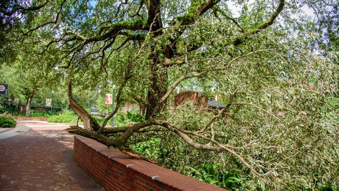 The damage done to the Florida State University campus after Hurricane Hermine hit, on Fri., Sept. 02, at Florida State University, in Tallahassee, FL.