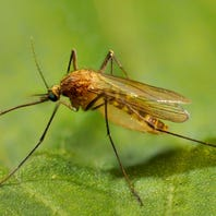 New cases of West Nile virus reported in Louisiana, including in DeSoto Parish