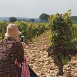 Fascinating and alluring, these rocky vineyards produce premiere Chateauneuf du Pape for Chateau de Beaucastel in France.