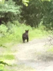 Pompton Lakes resident Sallyann Scala took this picture of the bear spotted in Pompton Lakes Monday morning. It was photographed on Ringwood Avenue near the railroad tracks.
