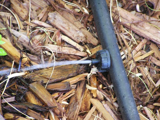 Drip irrigation slowly applies water to a specific