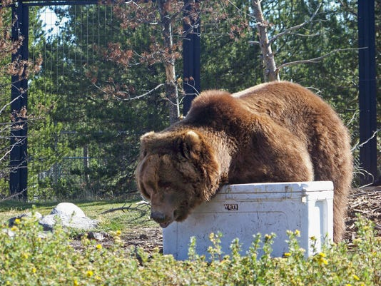 636102310407156361-Grizzly-Bear-Coolers-NYBZ173.jpg