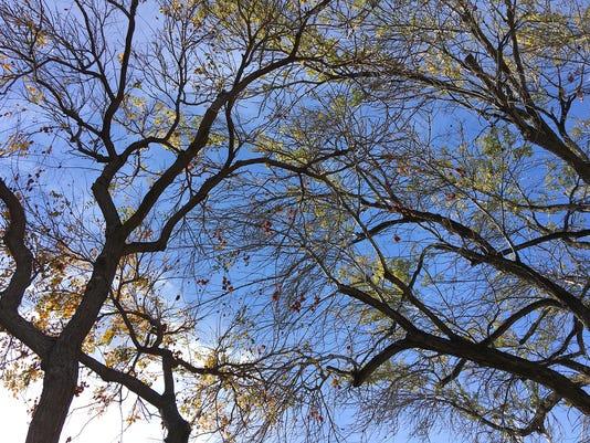 tree-and-sky1.jpg