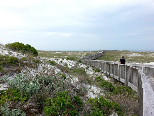 Giant dunes peppered with sand pines, scrub, and colorful wildflowers in season attract visitors to Henderson Beach State Park.