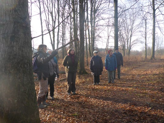 Naturalist-led Forest Fitness Walks take place fall,