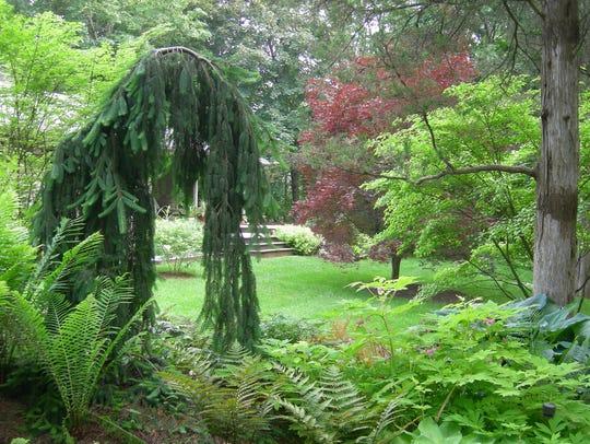 Dappled Berms, the garden of Scott VanderHamm in Poughkeepsie