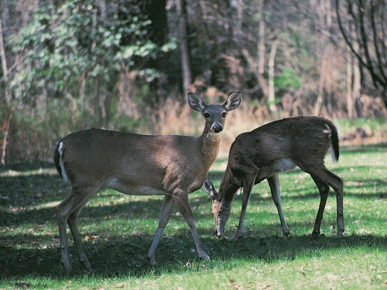 CWD is always fatal to animals that contact it.