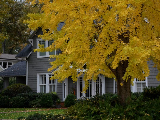 Image result for autumn gold ginkgo