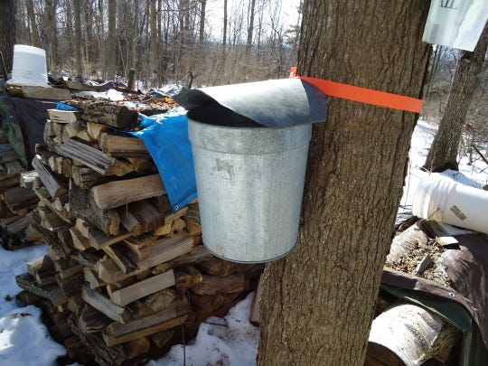Buckets and firewood — key ingredients for sugaring.