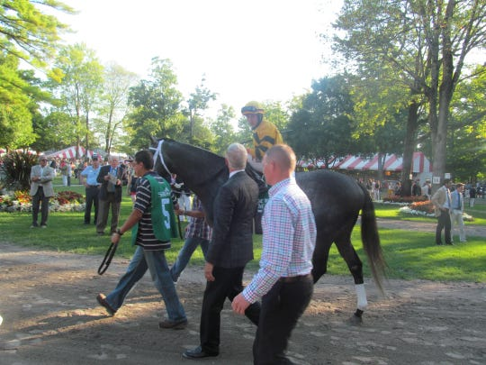 A horse is led through the paddock prior to the start of a race at Saratoga Race Course.