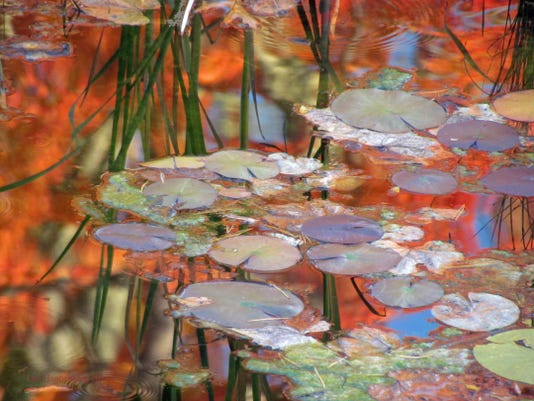 Water Lilies to Aprl8.jpg