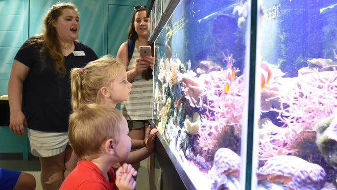 Visitors look in wonder at the nearshore reef ecosystem exhibit prepared and maintained by the Smithsonian Marine Station Fort Pierce at the St. Lucie County Aquarium, 420 Seaway Drive in Fort Pierce.