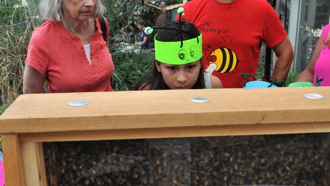 10-year-old Larissa Morales, center, looks at a hive of honey bees, Thursday afternoon during the River Bend Nature Center's insects day.