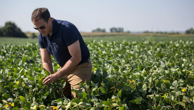 Grant Kimberley, a sixth germination family farmer and Market Development Director for the Iowa Soybean Association, checks soybeans on his family's farm, Tuesday, Sept. 5, 2017, in rural Polk County.