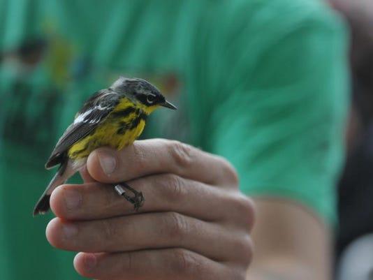 bird day 1
