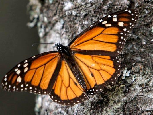 Mexico Monarch Butter_Radw(1).jpg